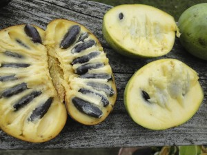 pawpaw_comparison